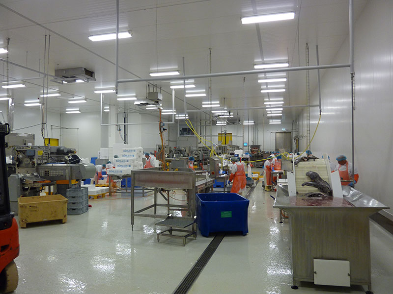 Chilled production room for sea fish
